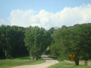 Yvette Craddock tree image